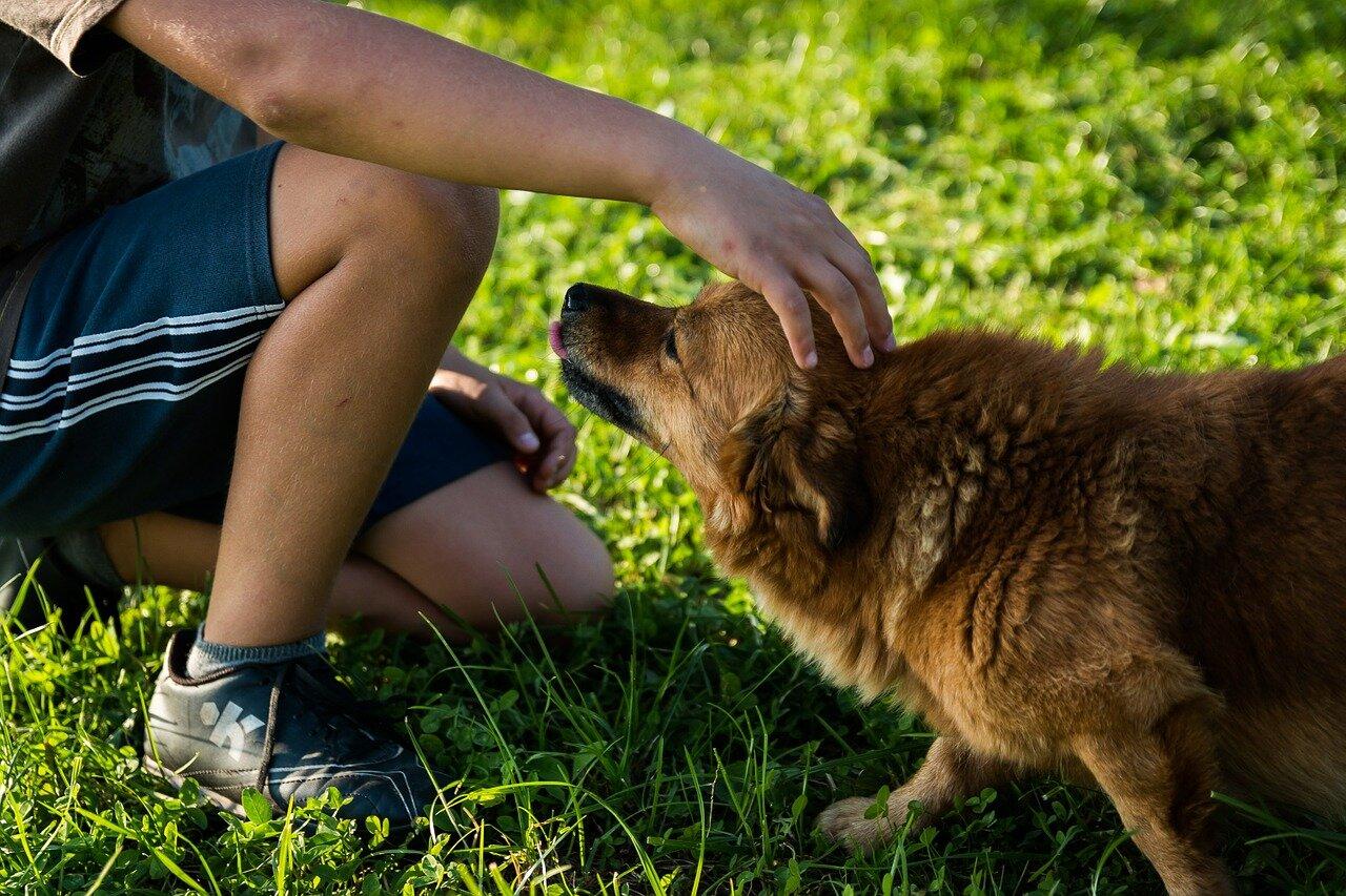 Domowe metody leczenia świerzbu u psa