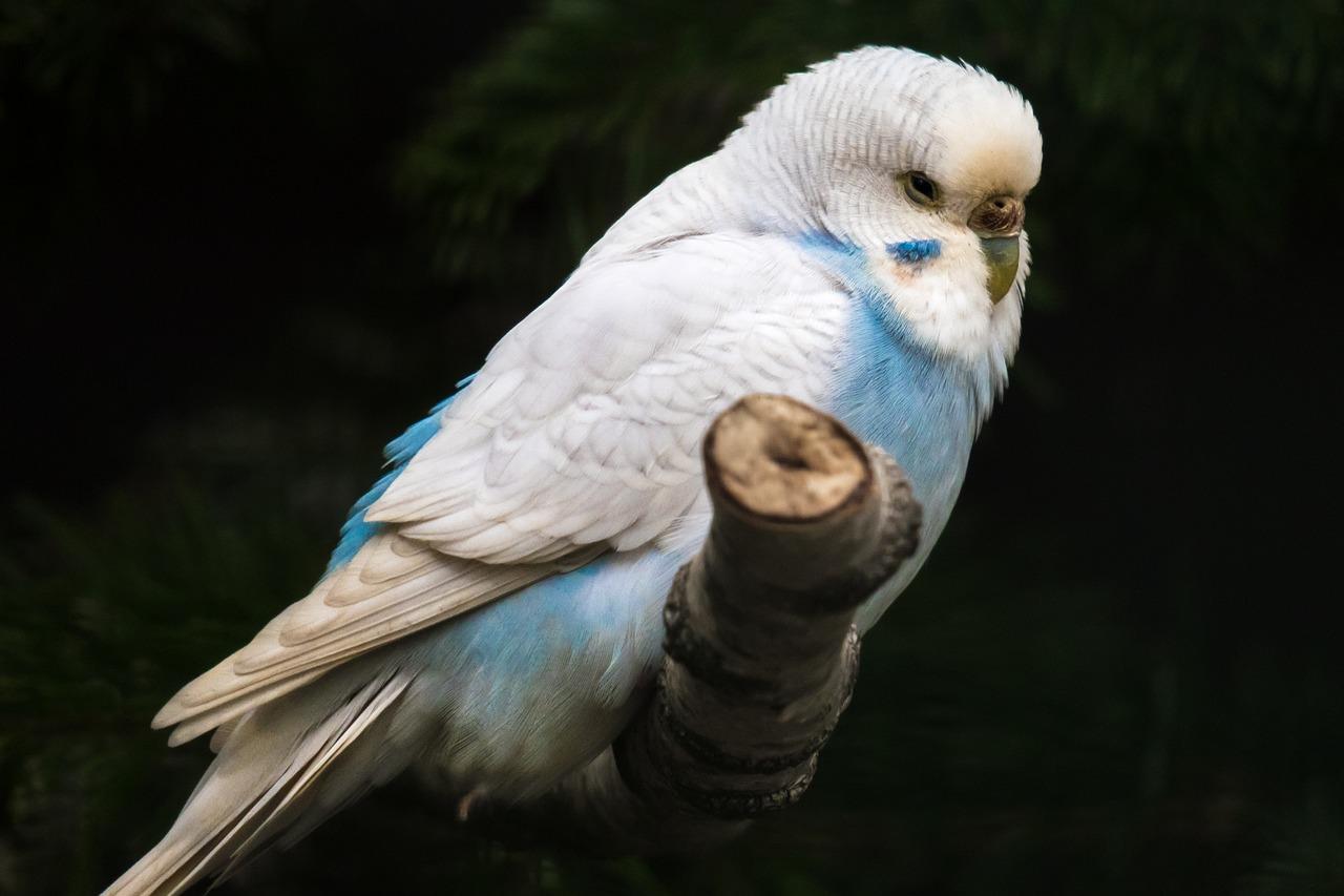 Gdzie najlepiej kupić papugi?